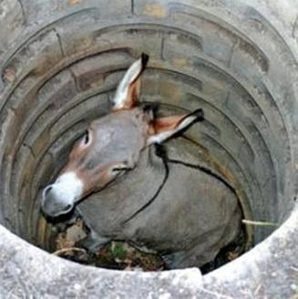 Resultado de imagem para charge burro no poço